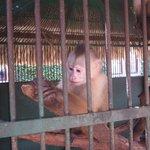 Cute monkey enjoying his peanut :)