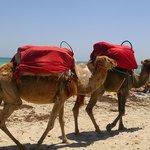 mr camel