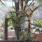 Koalas in the mist
