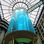 The great Aquarium in the Atrium in the Hotel