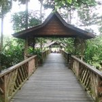 Sukai Rainforest Lodge Walkway