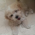 the owners super cute dog pascha!