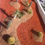 Кактусиная плантация на крыше 1го этажа