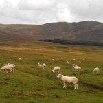 Rencontre avec des mouton sur le chemin