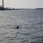 Dolphin Cruise at Port A