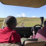 game drive with great guides