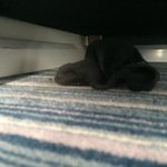 Somebody else's sock under the chair..
