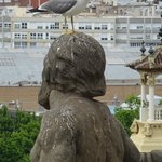 Persistent seagull in Barcelona (with Rainbow Barcelona Tours)