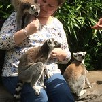How lovely to see the animals up close as we walked around the enclosure ��