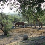 Horses on the grounds