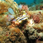 another amazing nudibranch