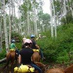 Through the Aspen trees