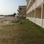 Geese outside by balconies