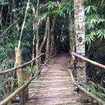 Bamboo bridge at the grounds
