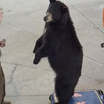 awesome bear show!