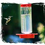 Hummingbird Festival 2014