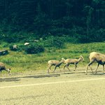 More wildlife during our drive in to Upper Lake