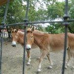 Matching donkeys!