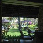 gecko bar view