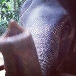 Excited elephant up close and personal!