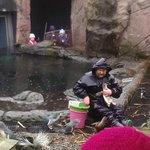 Penguin Feeding