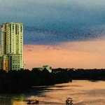 Congress Ave Bridge - Bats Against Skyline