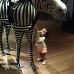 One year old Calissa greeting the zebra.