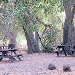 Picnic Areas, Sunol Regional Wilderness Park, Sunol, Ca