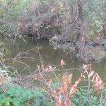 The creek again
