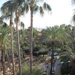 palm tress and sun