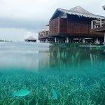 Life coral under water villas
