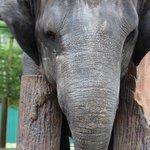 elephants were wonderfuland very gentle