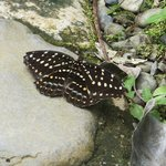 Butterfly in the enclosed area of Butterfly Garden