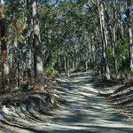 Mount Tamborine 4WD track