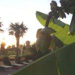 tolle Bananenpflanze am Pool