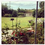 View from kitchen table/front garden