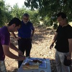 picnic under the almond trees