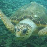 lovely loggerhead saying welcome to Belize