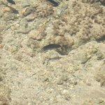 peces en playa 3