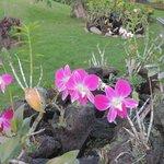 orquideas en el parque