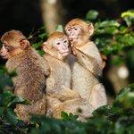 jeunes singes dans les arbres