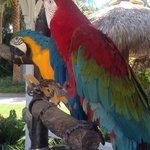 hotel parrots