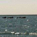 Wild horses spotted on our trip with Crystal Coast Ecotours