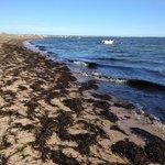 Sea weed strewn shoreline