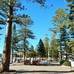 Beautiful trees line the boardwalk.