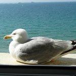 Visite sur le bord de la fenêtre