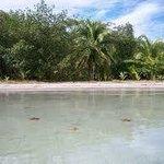 AMAZING Starsfish beach