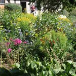 So many different types of cottage garden flowers.