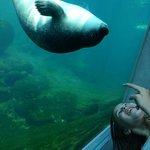 Säl på oceanarium
