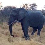 Big game on safari
